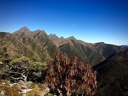 Overlooking Dragon's Teeth and Anatoki Peak just past Green Saddle, a ''Dracophyllum traversii'' in the foreground. The plant only grows in the northwest of the South Island above 750m
