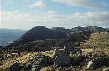 Smiths Gully, from top of coastal escarpment, north of Makara Beach, photograph by Barbara Mitcalfe